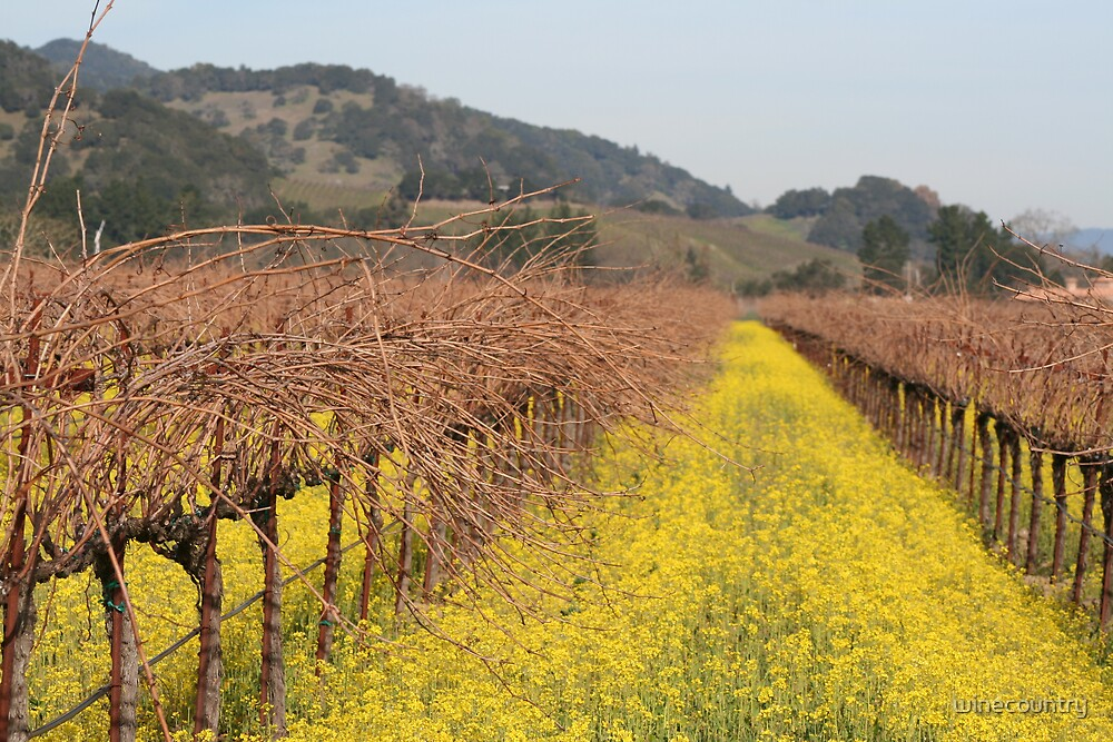 Mustard in the Vineyards by winecountry