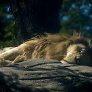 resting by jude walton