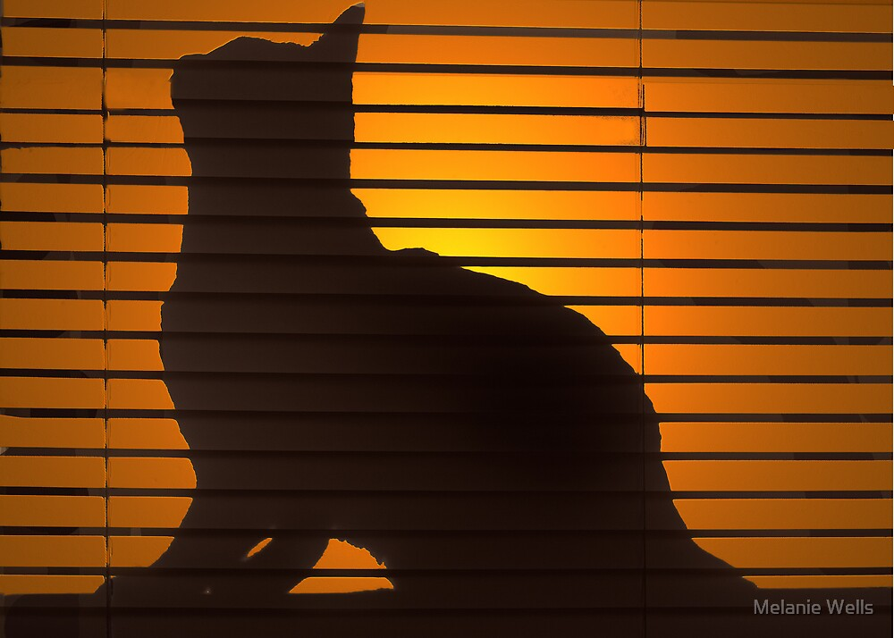 Shadow Cat by Melanie Wells