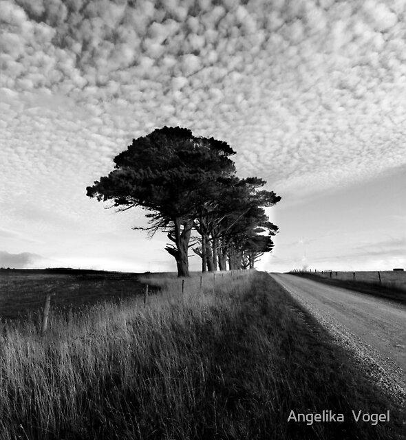 A Road to Marrawah...Tasmania by Angelika  Vogel