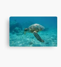 Green sea turtle underwater Canvas Print