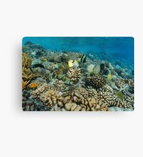 Underwater tropical sea colorful fish coral reef Canvas Print
