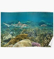 Underwater coral reef shark and sea turtle Poster