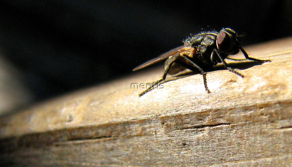 "Mr Fly ""The Poser"" by mentis"