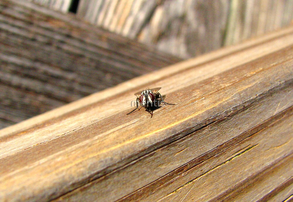 A different view of Mr. Fly by mentis