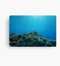 ocean sunlight underwater coral fish Canvas Print