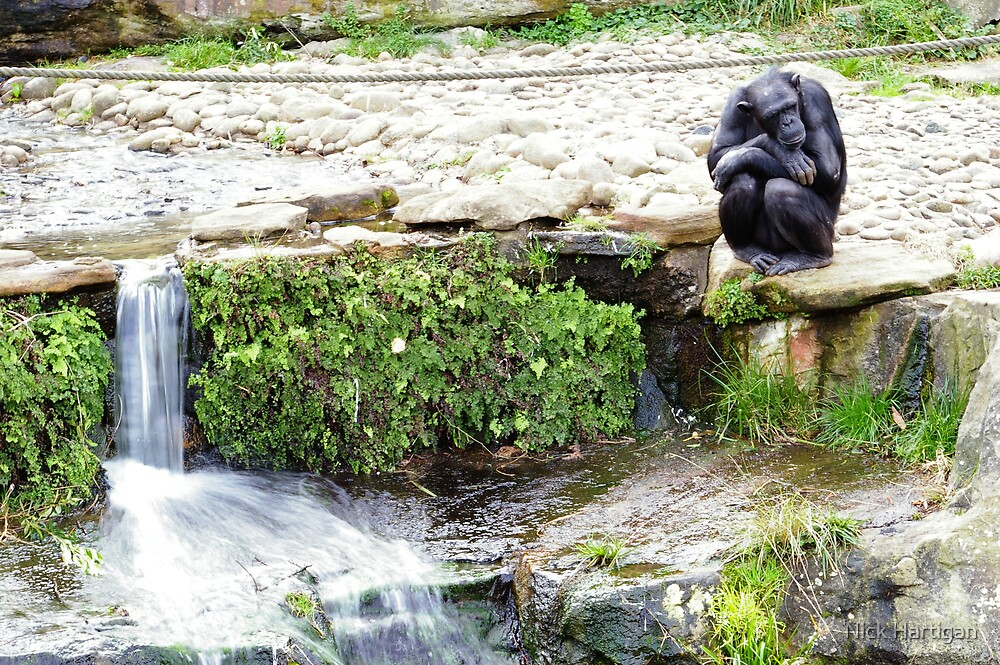 Monkey Stream by Nick Hartigan