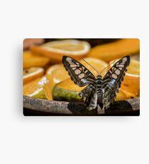 Mariposa y Naranjas Canvas Print
