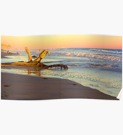 Drift Wood, Goleta, California Poster