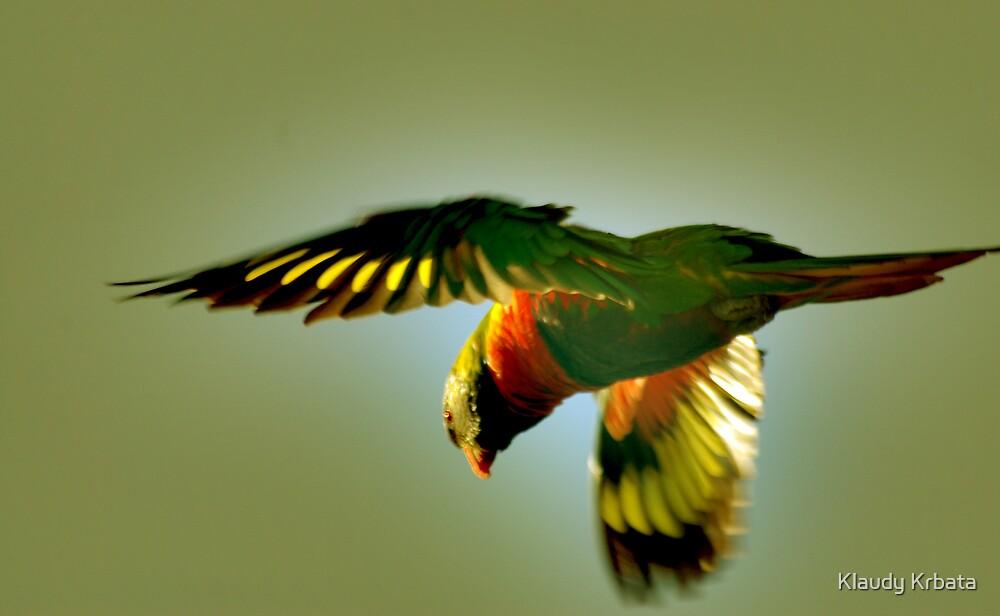 rainbow lorakeet by Klaudy Krbata