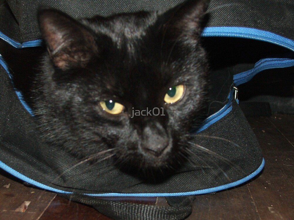 bag cat  by jack01