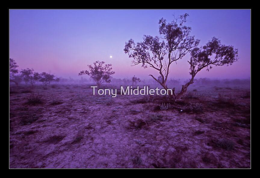 outback dawn I. by Tony Middleton