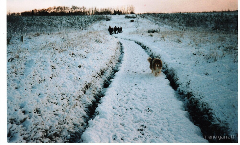Wintertime in Leicestershire by irene garratt