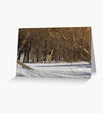 Local Deer Greeting Card