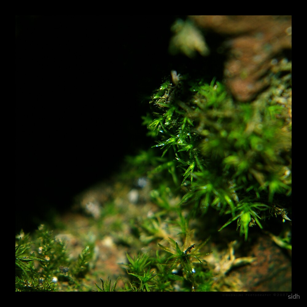 Square moss by Sophie Cagnac