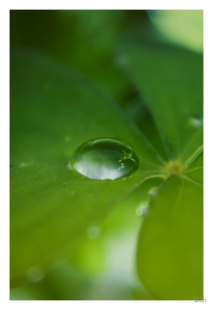 Clover drop by Sophie Cagnac