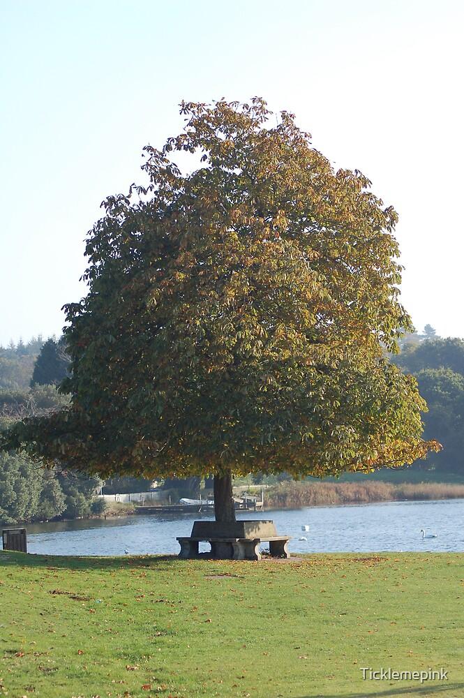 Lonely Oak by Ticklemepink