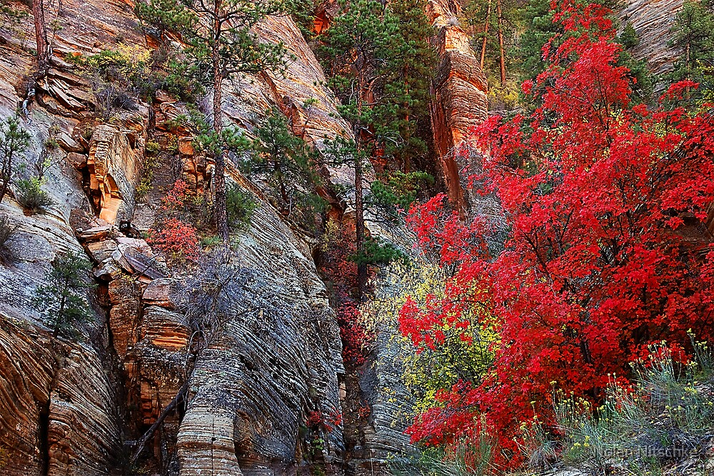 Fall Color in Zion by Nolan Nitschke