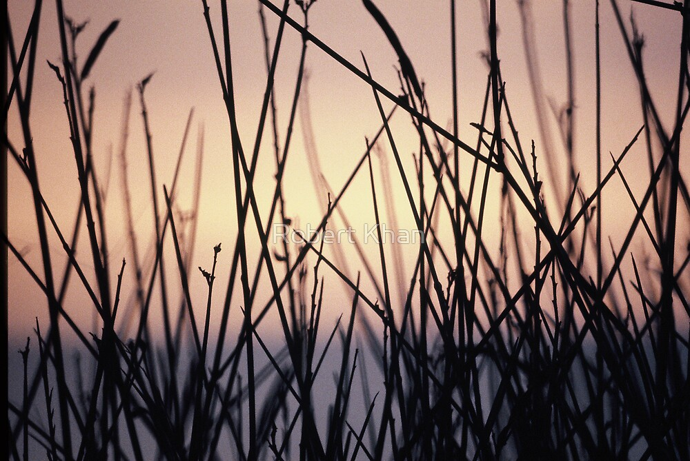 Weeds in Sunset by Robert Khan