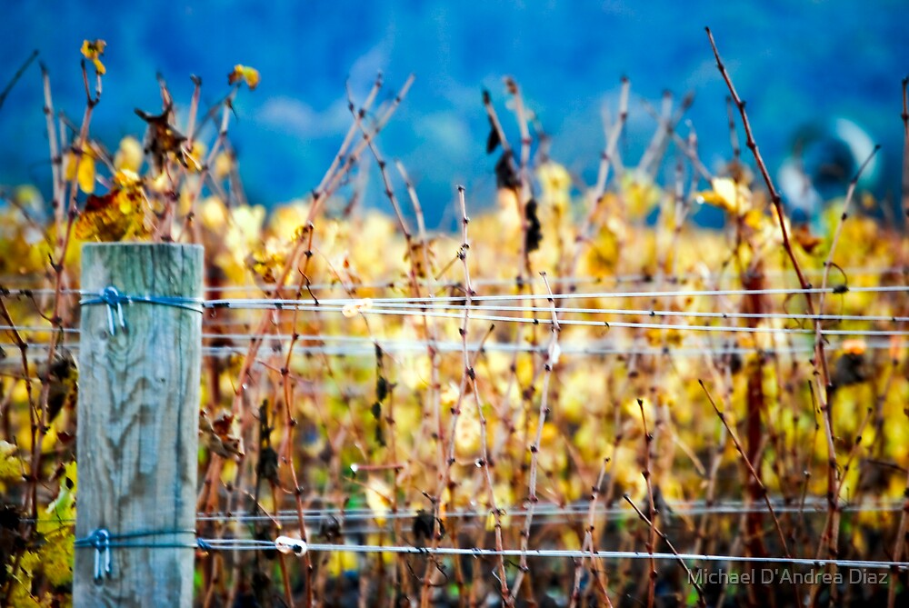 Fenced In by Michael D'Andrea Diaz