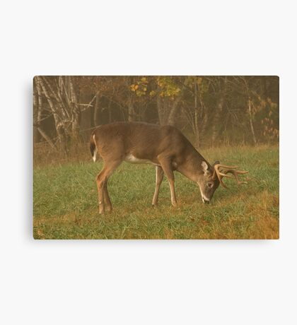 Early Morning Meal Canvas Print
