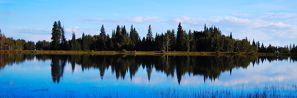 Reflection by Julie Cooper