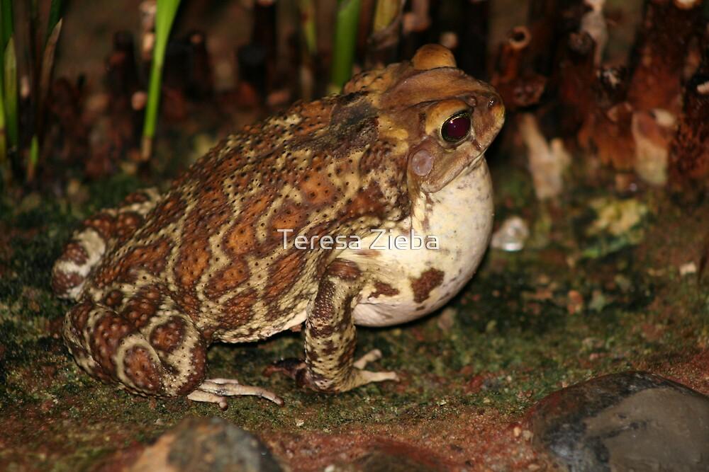 Common Toad by Teresa Zieba
