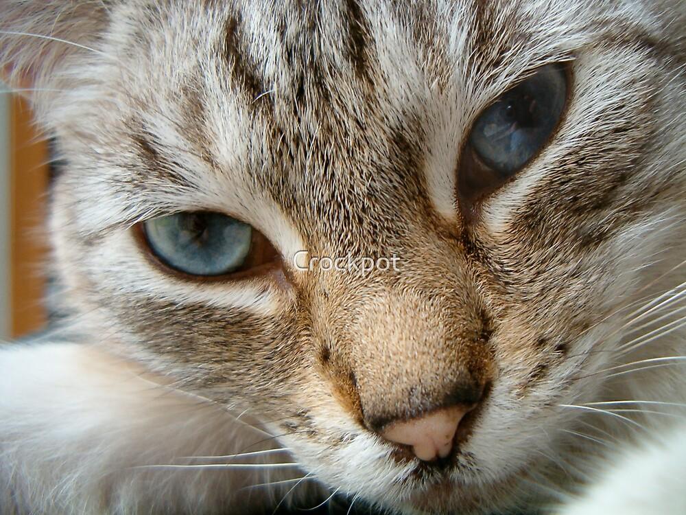 Love Kitty by Crockpot