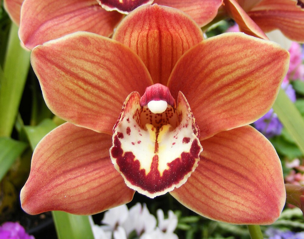 Russet Orchid by terryk