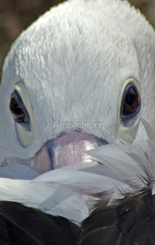 A Pelican. by Aussiebluey