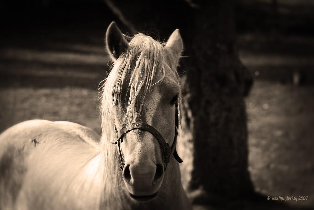Horse by Martyn Starkey