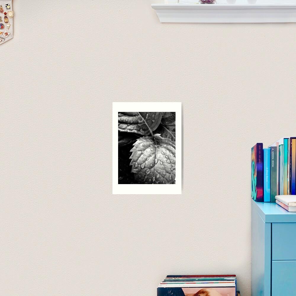 Hydrangea raindrops III Art Print