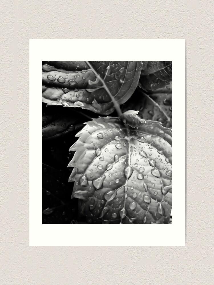 Alternate view of Hydrangea raindrops III Art Print