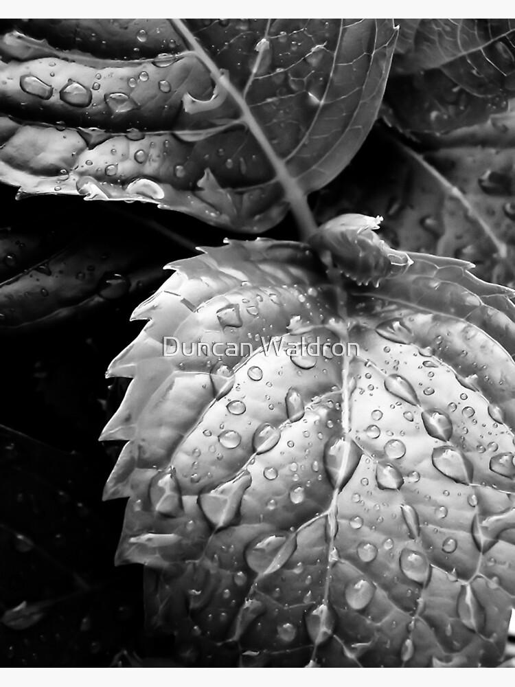 Hydrangea raindrops III by DuncanW