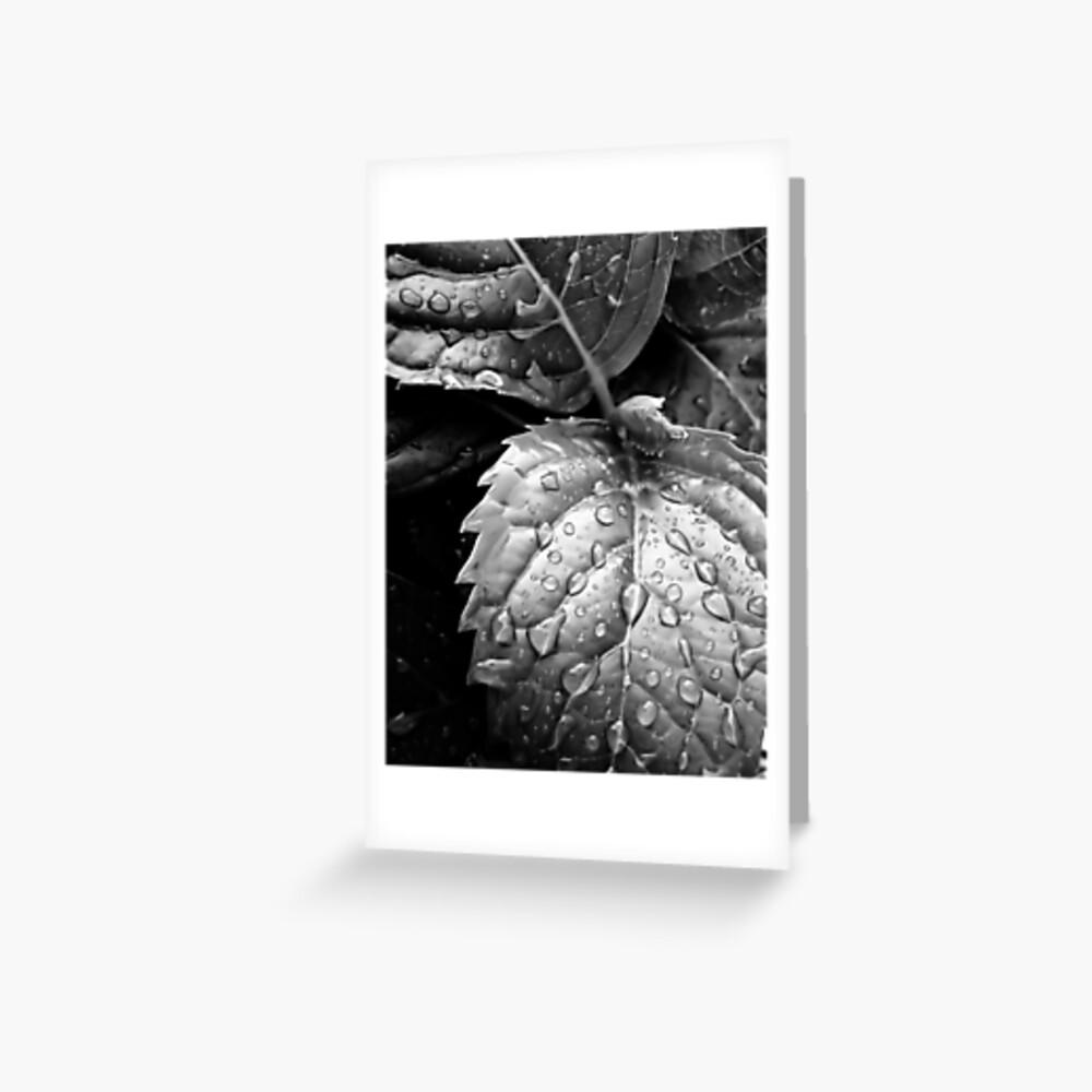Hydrangea raindrops III Greeting Card