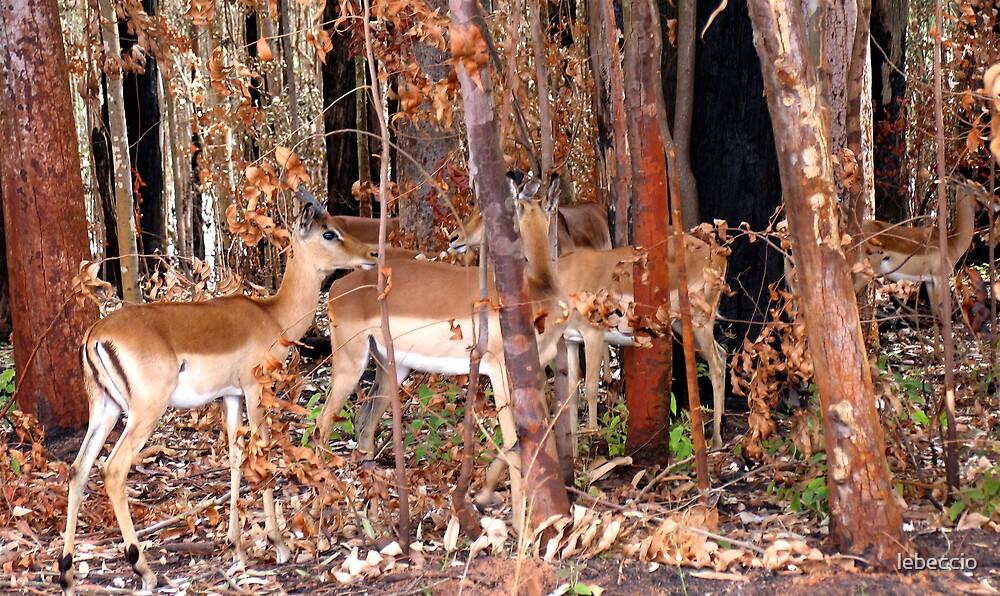 Impalas thru the trees by lebeccio