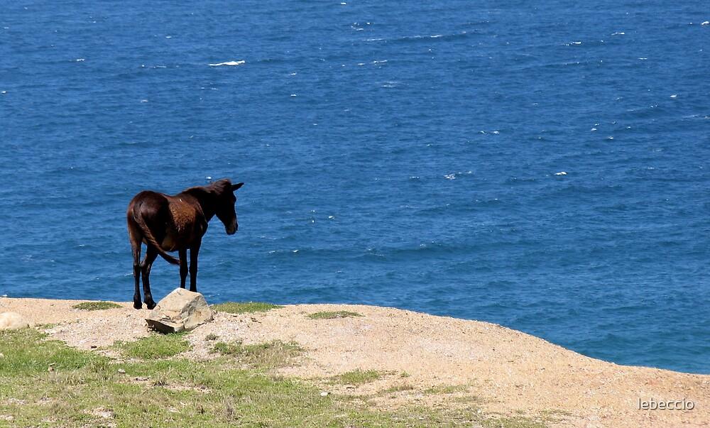 Suicidal mule by lebeccio