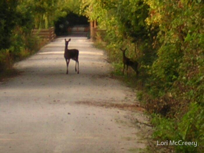 A Glimpse of Deer by Lori McCreery