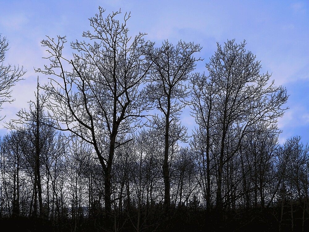 Trees In Blue by Gene Cyr