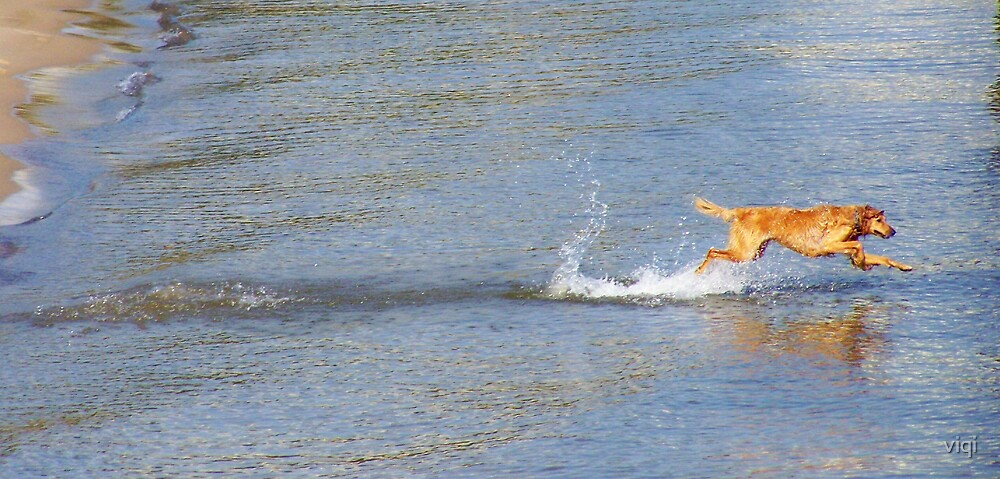 Doggy Dash by viqi