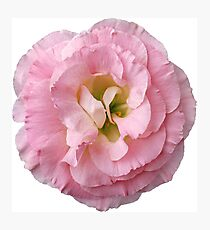 Pink Flower Petals with Green Background Photographic Print
