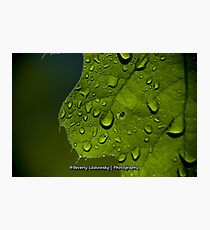 Water Drops through a Bright Green Leaf Photographic Print