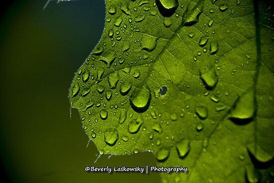 Water Drops through a Bright Green Leaf by BLaskowsky