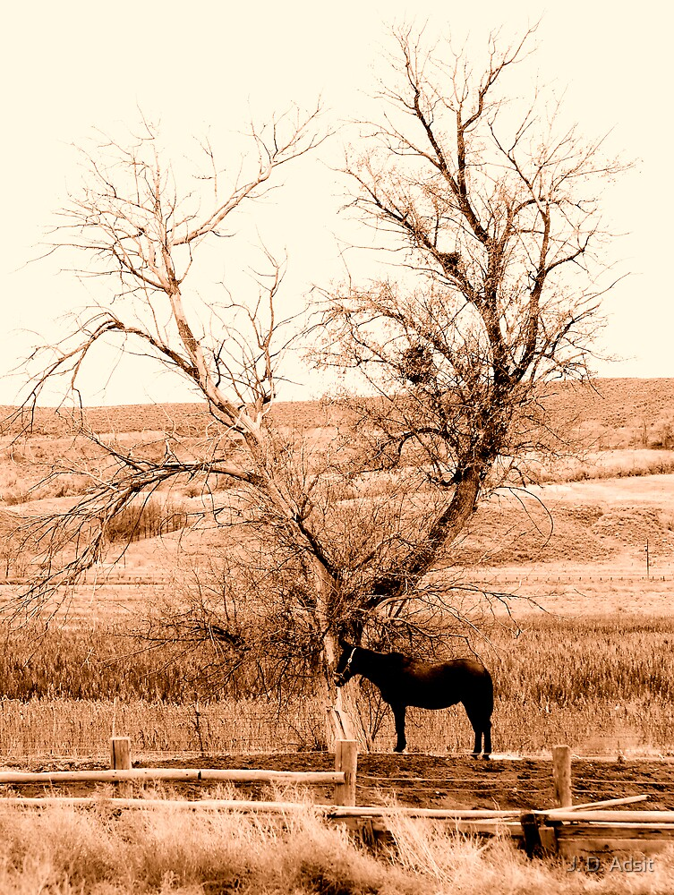 40 acres and a Mule by J. D. Adsit