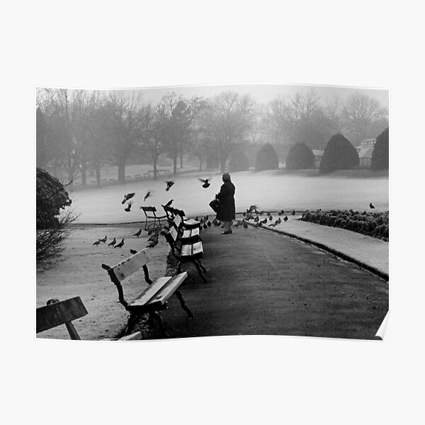 Shy woman feeding pigeons Poster