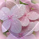 Hearts in Pink by AnnDixon