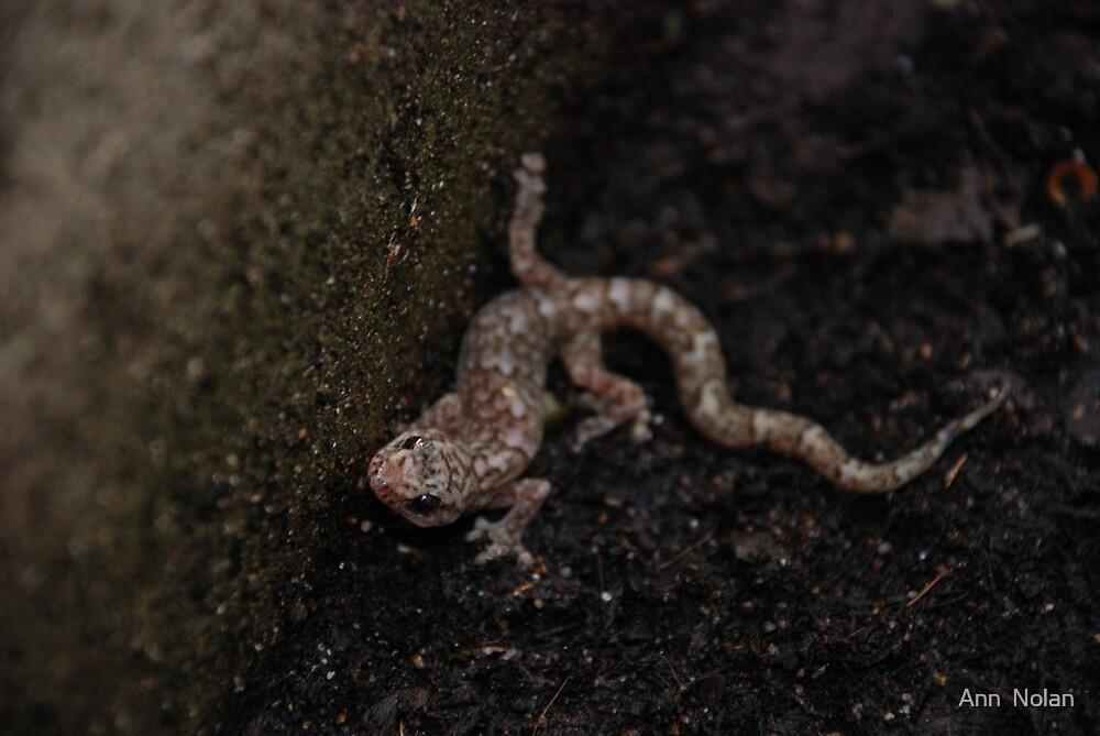 Gecko by Ann  Nolan