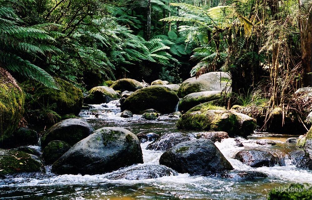 river by blackbear