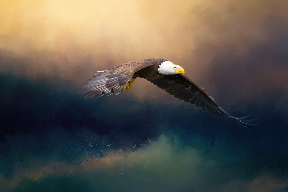 Painting flying american bald eagle by Gatterwe