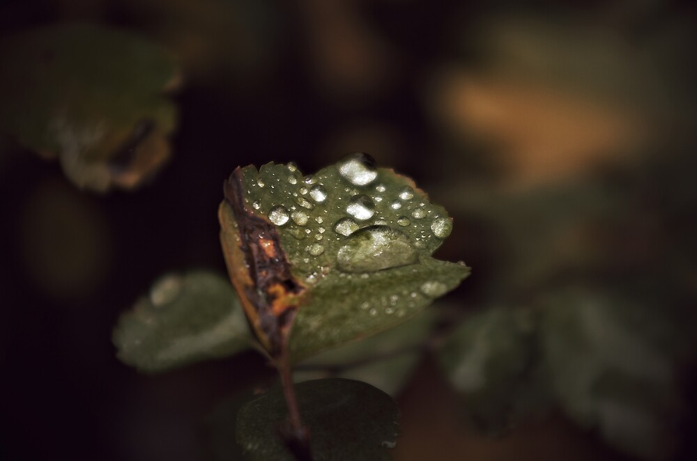 Cosy Leaf by John Roshka